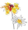 drawing flowers of daisy vector image vector image