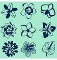 tropical flowers set vector image