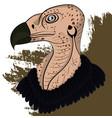vulture head vector image vector image