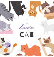 cute kitty cat poster with different kitten vector image