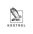 flying kestrel bird square logo icon vector image