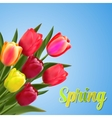 Spring text with tulip flower vector image vector image