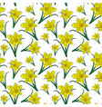 blooming yellow daffodils with green leaves vector image vector image