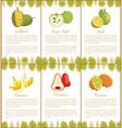 jackfruit sugar apple bael banana champoo posters vector image vector image