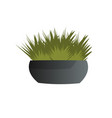 potted plant isolated on white background vector image vector image
