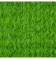 Seamless pattern of green grass vector image vector image