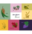 Seven species of the Holy Land Jewish holiday vector image vector image