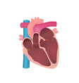 anatomy of the human heart vector image vector image