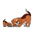 beagle dogs pet on white background vector image