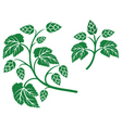 hops leaf design vector image