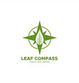 leaf compass logo vector image vector image