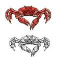 seafood crab marine crustacean sketch vector image vector image