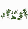 set mint branches vector image vector image