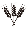 sheaf wheat engraving vector image