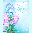 spring background with phlox vector image vector image