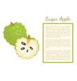 sugar-apple sweetsop custard poster frame text vector image