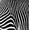zebra pattern large vector image vector image