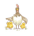 chicken-with-chickens vector image