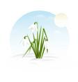 snowdrop - minimalistic flat design vector image vector image