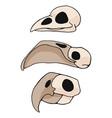 bird skull cartoon motif set vector image vector image