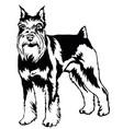 decorative standing portrait of dog miniature vector image vector image
