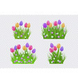 green grass tulip flowers set vector image