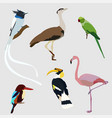 collection of indian birds vector image