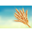 Ears of wheat vector image vector image