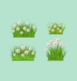 green grass chamomile daisy flowers bush vector image vector image