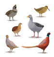 isolated hunting birds wildfowl vector image