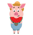 pig eating watermelon or color vector image vector image