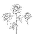 rose flower set hand drawn realistic open vector image vector image