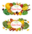 exotic tropic fruits farm harvest vector image vector image