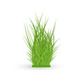green grass leaves bush vector image