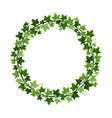 green ivy creeper plant wreath isolated on white vector image