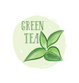 tea leaves herb label with lettering green tea vector image vector image