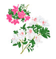 branches pink and white flowers rhododendrons vector image vector image