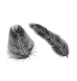 feather quill icon background bird vector image vector image