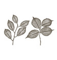 hand drawn twig tree with leaves sketch vector image
