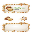 set banners with brazilian nut and ground nuts vector image vector image