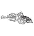 Bullhead fish engraving vector image vector image
