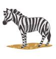 zebra equine animal with stripes on skin vector image