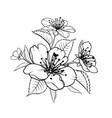 hand drawn design elements sakura flowers vector image vector image
