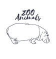 Hand drawn isolated hippopotamus Wild animal vector image