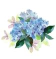 Hydrangea flowers vector image vector image