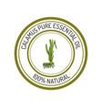 calamus essential oil label aromatic plant vector image vector image
