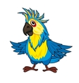 Colorful parrot vector image vector image