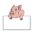 curious pig peeps out from behind a white rectangl vector image vector image