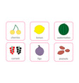 fruits and berries objects icons set isolated on vector image
