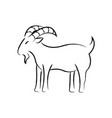outline draw goat vector image vector image